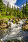 Summer mountain stream in the forest — Stock Photo