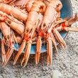 Fresh seafood straight from the sea — Stock Photo #31264467