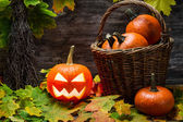Halloween kürbis im weidenkorb — Stockfoto
