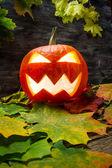 Hojas brillantes halloween calabaza en otoño — Foto de Stock