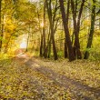 Morning sunlight in the autumn forest — Stock Photo