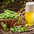 Golden ears in fresh beer and hops — Stock Photo