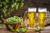 золотые уши в свежее пиво и хмеля — Стоковое фото