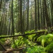 Mountain forest at dawn in the summer — Stock Photo