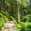 Stone path leading to the peak in summer — Stock Photo