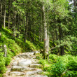 Stone path leading to the peak in summer — Foto de Stock