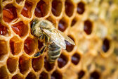 Bees in a beehive on honeycomb — Stock Photo