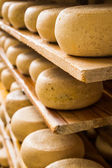 Ripened cheeses lying on wooden shelves. — Stock Photo