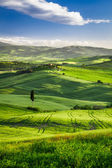 Beautiful view of the sunset over the green valley — Stock Photo