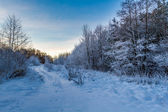 Forest path covered with snow at sunrise — 图库照片