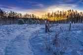 在森林里的冬季日出 — 图库照片