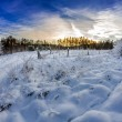 Forest path covered with snow at sunrise — Stock Photo