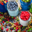 Closeup of collecting fresh wild berries — Stock Photo #38592675