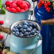 Collecting fresh wild berries — Stock Photo