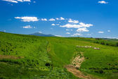 Sheep Grazing in Rolling Tuscany Landscape — Stock Photo