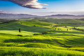 Green valley at sunset in Tuscany — Stock Photo