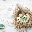 Stock Photo: Countdown days to leave nest
