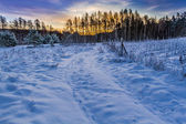 Sunrise over a snow covered forest — Stock Photo