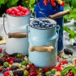 Stock Photo: Freshly harvested wild berry fruits in summer