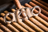 Cutting off cigar tip on cigars pile — Stock Photo