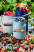 Freshly harvested wild berry fruits in summer — Stock Photo