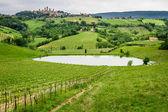 Field of grapes on a pond in Italy — Stock Photo
