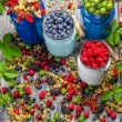 Closeup of collecting fresh wild berries — Stock Photo