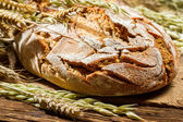 Closeup of freshly baked country bread — Stock Photo