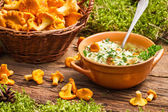 Chanterelles mushroom with cream and parsley are in the forest — Stock Photo