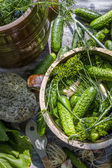 Pickling low-salt cucumbers in a clay pot — Stock Photo