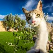 Curious cat in the countryside, Tuscany — Stock Photo #49591457