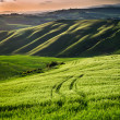 Beautiful view of green fields and meadows at sunset in Tuscany — Stock Photo #49593189