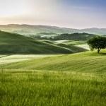 dimmiga ängar på morgonen, Toscana — Stockfoto #49594635