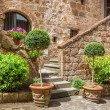 Stone entrance to the ancient house full of plants — Stock Photo #49595163