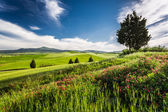 Green fields and meadows in the valley of Tuscany — Stock Photo