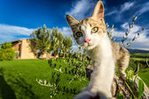 Curious cat in the countryside, Tuscany — Stock Photo