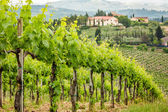 Field of vines on a background of a hacienda in Tuscany — Stock fotografie