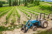 Vines on the field and a blue tractor — Stock Photo