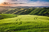 Beautiful view of the country footpath at sunset in Tuscany — Stock Photo