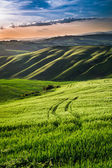 Beautiful view of green fields and meadows at sunset in Tuscany — Stock Photo
