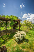 Old wooden pergola covered with flowers — Stock fotografie