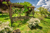 Old wooden pergola on a Farm in Tuscany — Stock Photo