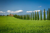 Tuscany road with cypresses trees — Foto Stock