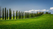 Road with Cypresses to agritourism in Tuscany — Stock Photo