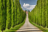 Road to agritourism in Tuscany between cypresses — Stock Photo