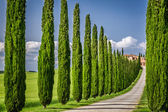 Road to agritourism in Tuscany with cypresses — Stock Photo