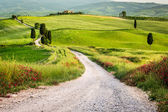 Dirt road and green field in Tuscany — Foto Stock