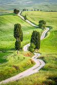 Dirt road and green field in Tuscany, Italy — Stock Photo