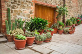 Porch full of cacti in Tuscany — Stock Photo