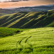 Beautiful view of green fields and meadows at sunset in Tuscany — Stock Photo #51027255